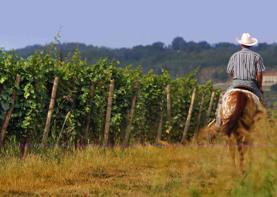 In-Franciacorta-a-cavallo